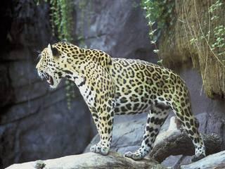 Endangered rainforest animals list for kids